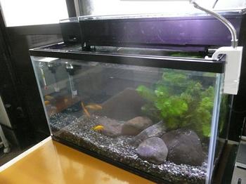 20150403 金魚.jpg